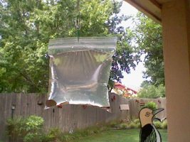 Melhor forma para eliminar mosquitos